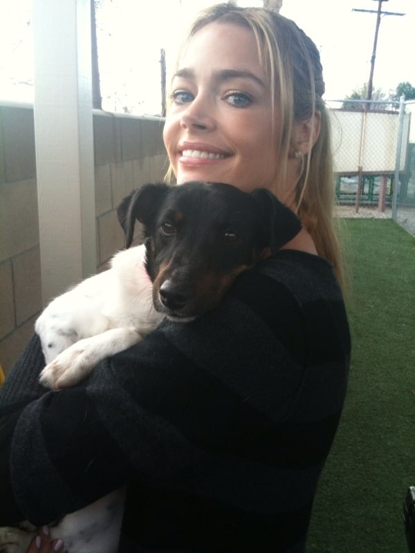 denise richards dog lover