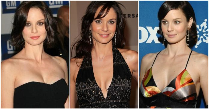 49 Hot Pictures Of Sarah Wayne Callies Will Prove That She Is One Of The Hottest Women Alive And She Is The Hottest Woman Out There