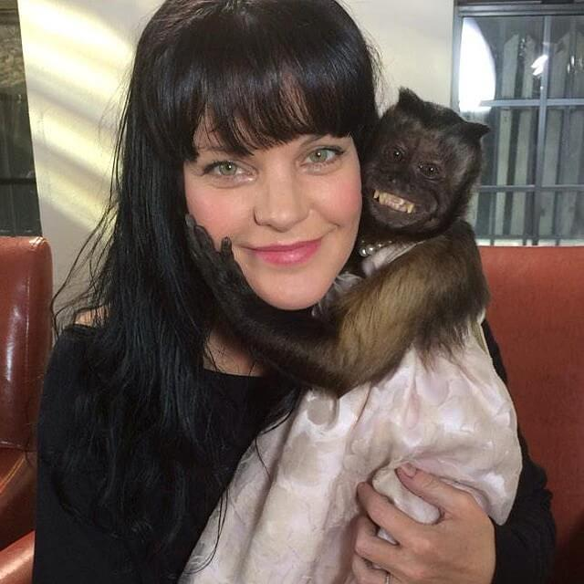 pauley perrette with monkey